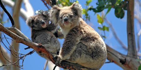 Two Weeks in Australia