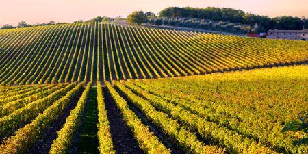 Italy Wine Honeymoon Ideas