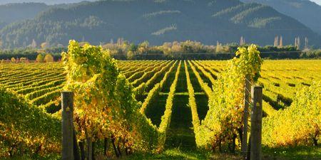 New Zealand Wine Itinerary